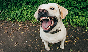How to Manage an Aggressive or Defensive Dog